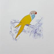 Oiseau Miró
