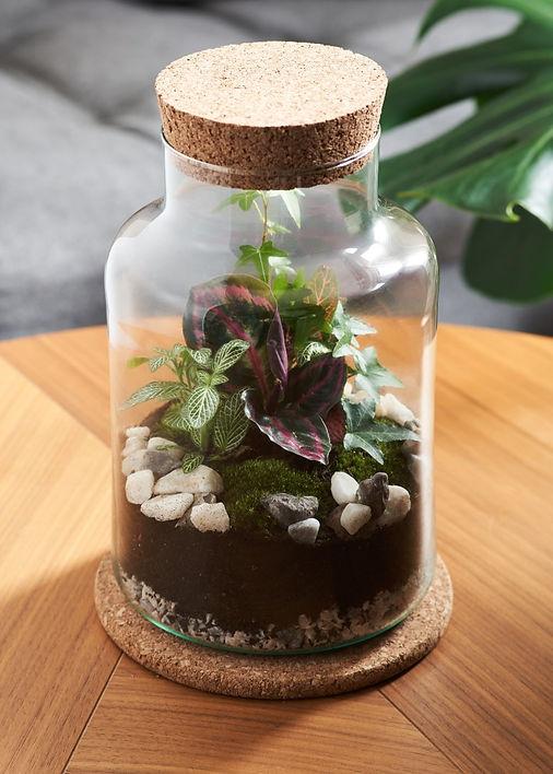 jarand fern terrarium