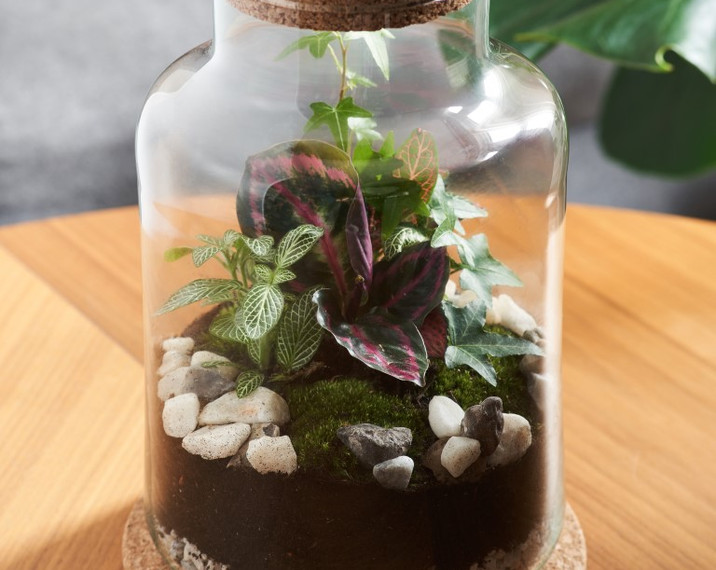 jar and fern terrarium