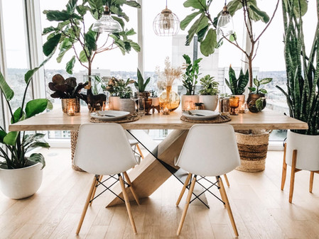 How to get your plants to like you- General houseplant advice
