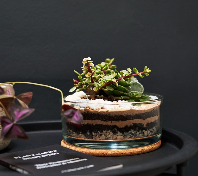 Jar and Fern Succulent terrarium