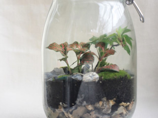 Terrarium workshops at the University of Southampton Doctoral Festival