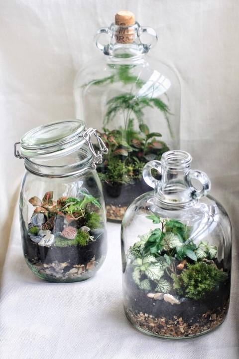 Jar Terrarium Workshop Gift Voucher