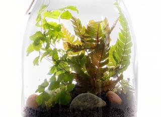 Terrariums - Bring a little piece of the garden into your home…