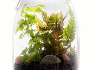 Terrariums - Bring a little piece of the garden into your home…