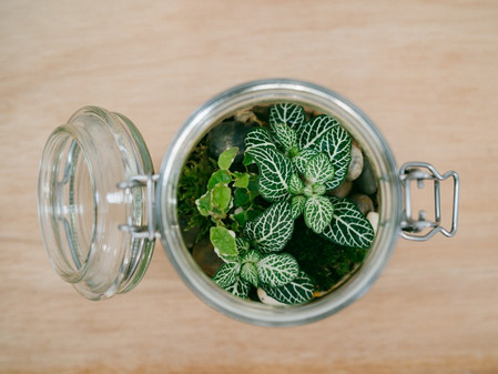 The perfect plants for your Terrarium