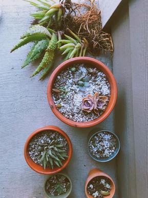 Re-potting Houseplants