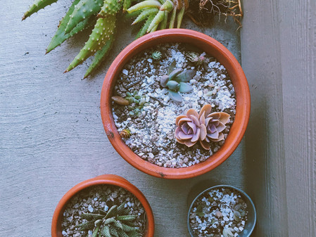 Re-potting Houseplants