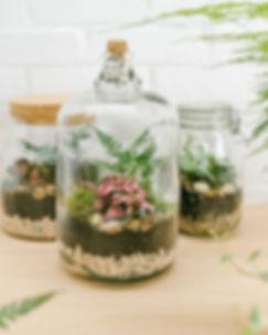 Jar and Fern8250-Edit-Edit (Medium).jpg