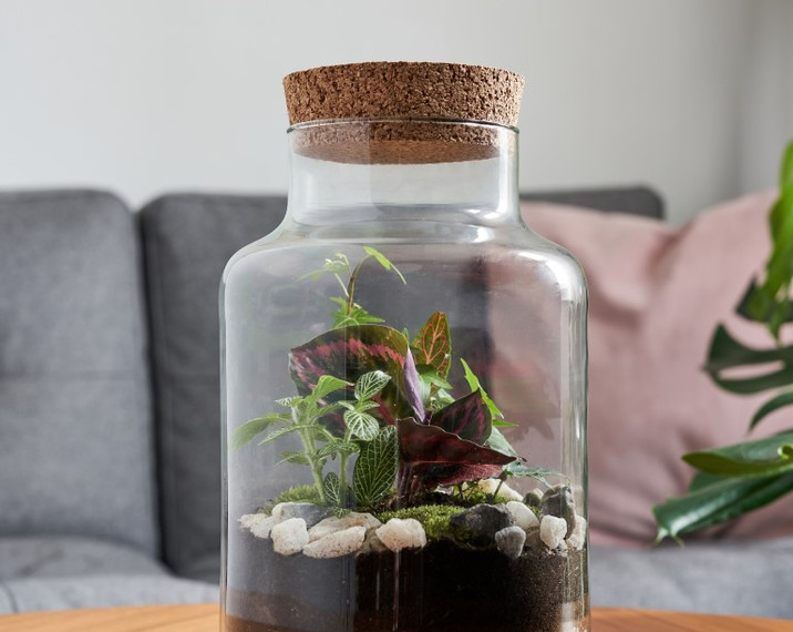 sealed terrarium 1