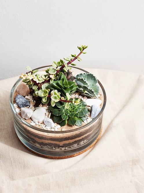 DIY 'Succulent Terrarium' Kit - With instructional guide