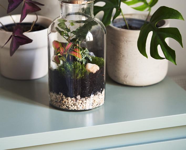 Jar and Fern Terrarium