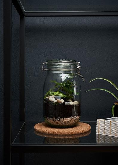 DIY 'Jar Terrarium' Kit - With instructional video