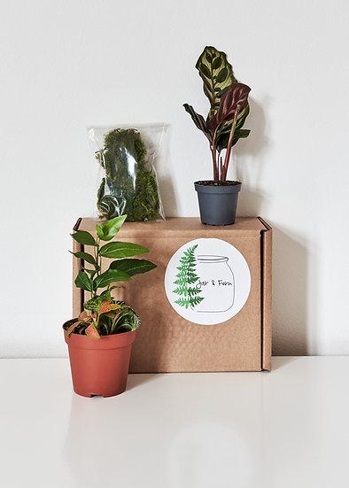 Large Terrarium Plants