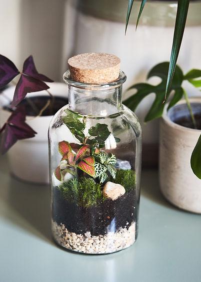 bottle jar terrarium kit