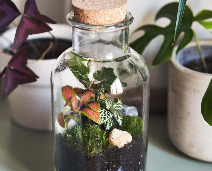 Bottle terrarium kit