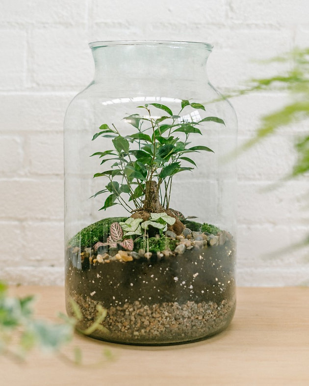 Why Terrariums Are Back In Fashion Jar And Fern Terrariums To
