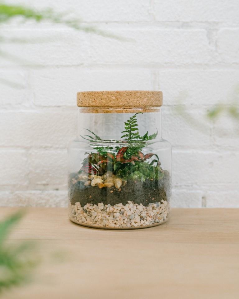 Corked jar terrarium