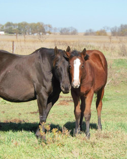Kings Wimpy Squaw with filly