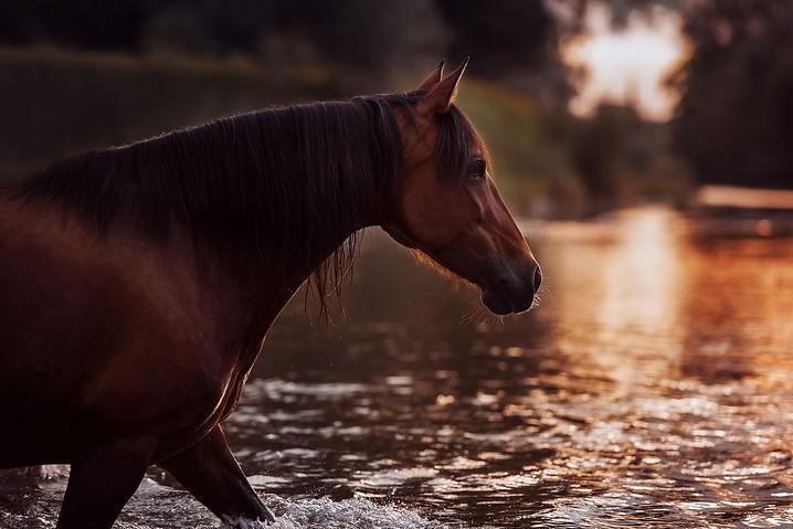 Susanne Brunnmeier Pferdefotografie Bayern (01) web ohne.jpg
