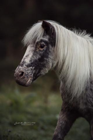 Brunnmeier Fotografie Pferde 2019