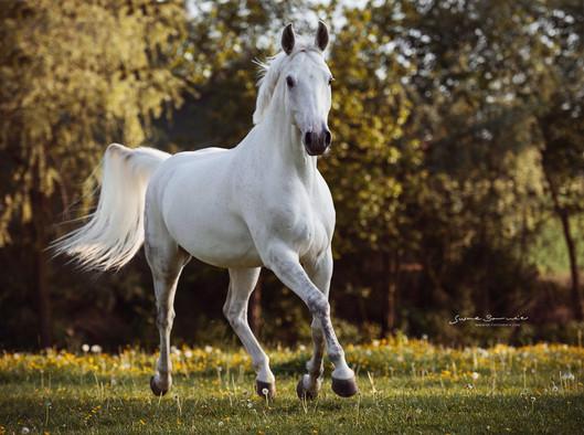 Brunnmeier Fotografie Pferde 2017