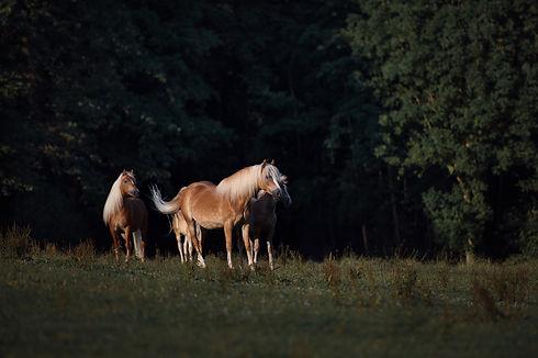Brunnmeier Pferdefotografie Bayern (14) web ohne.jpg