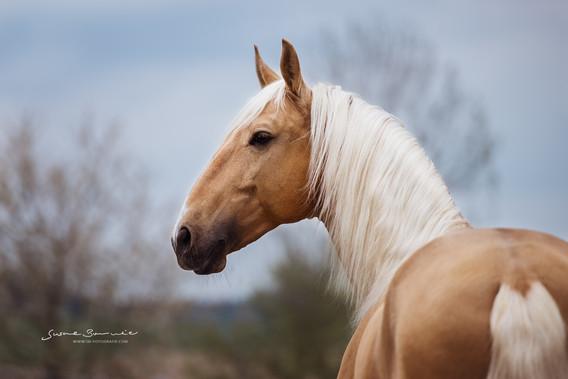 Susanne Brunnmeier Pferdefotografie Bayern