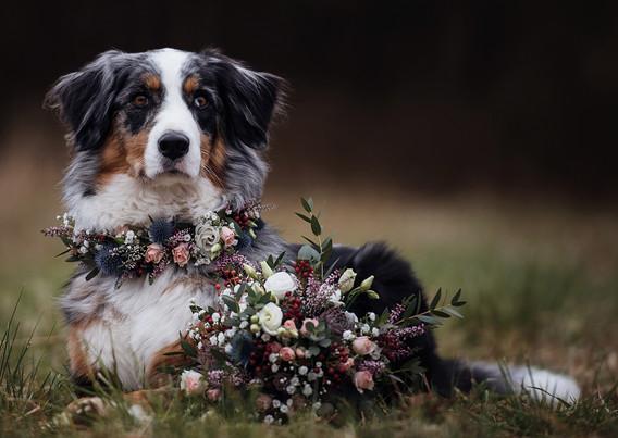 Entwurf GS Hunde DINA5 - vorne 03 web oh