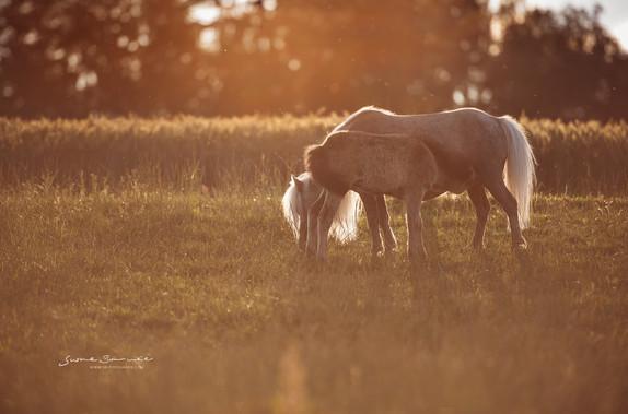 Brunnmeier Pferdefotografie Bayern