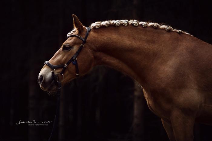 Brunnmeier Fotografie Pferde