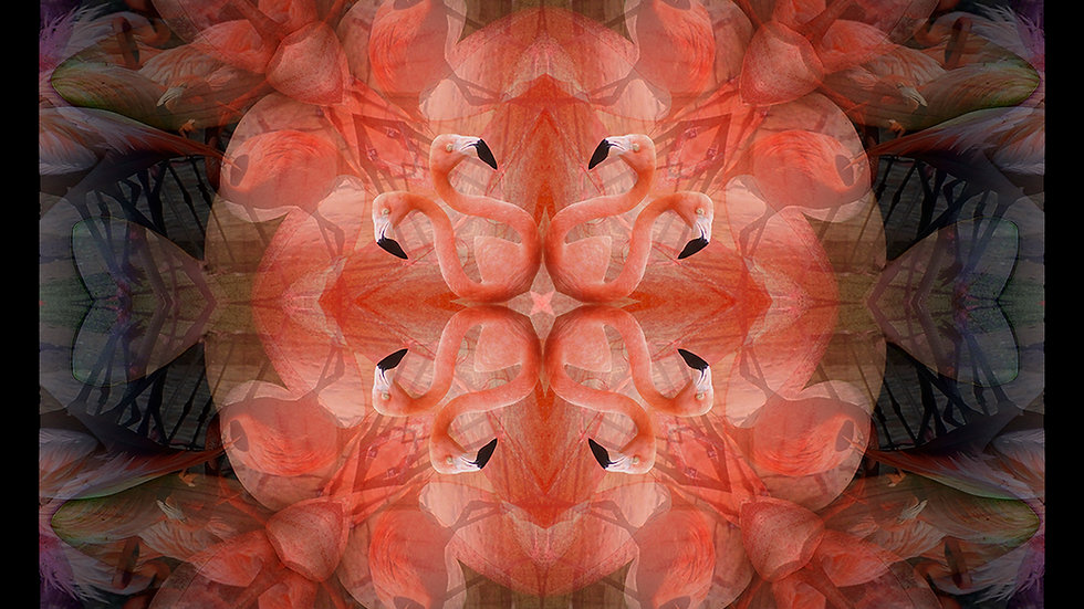 """""""Flamingos"""" 60x60cm"""