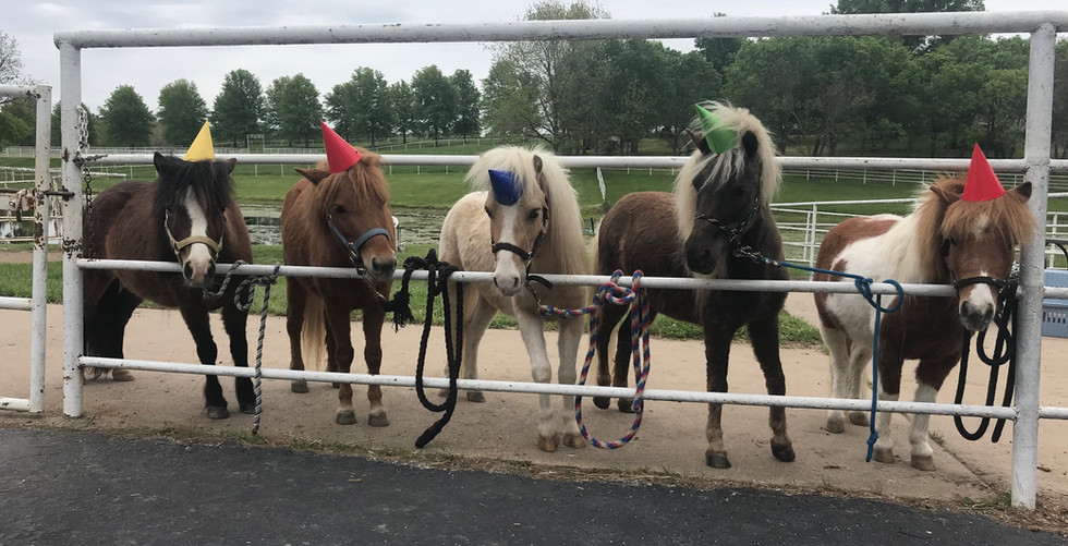 Mini Horses are ready for your family fun night!