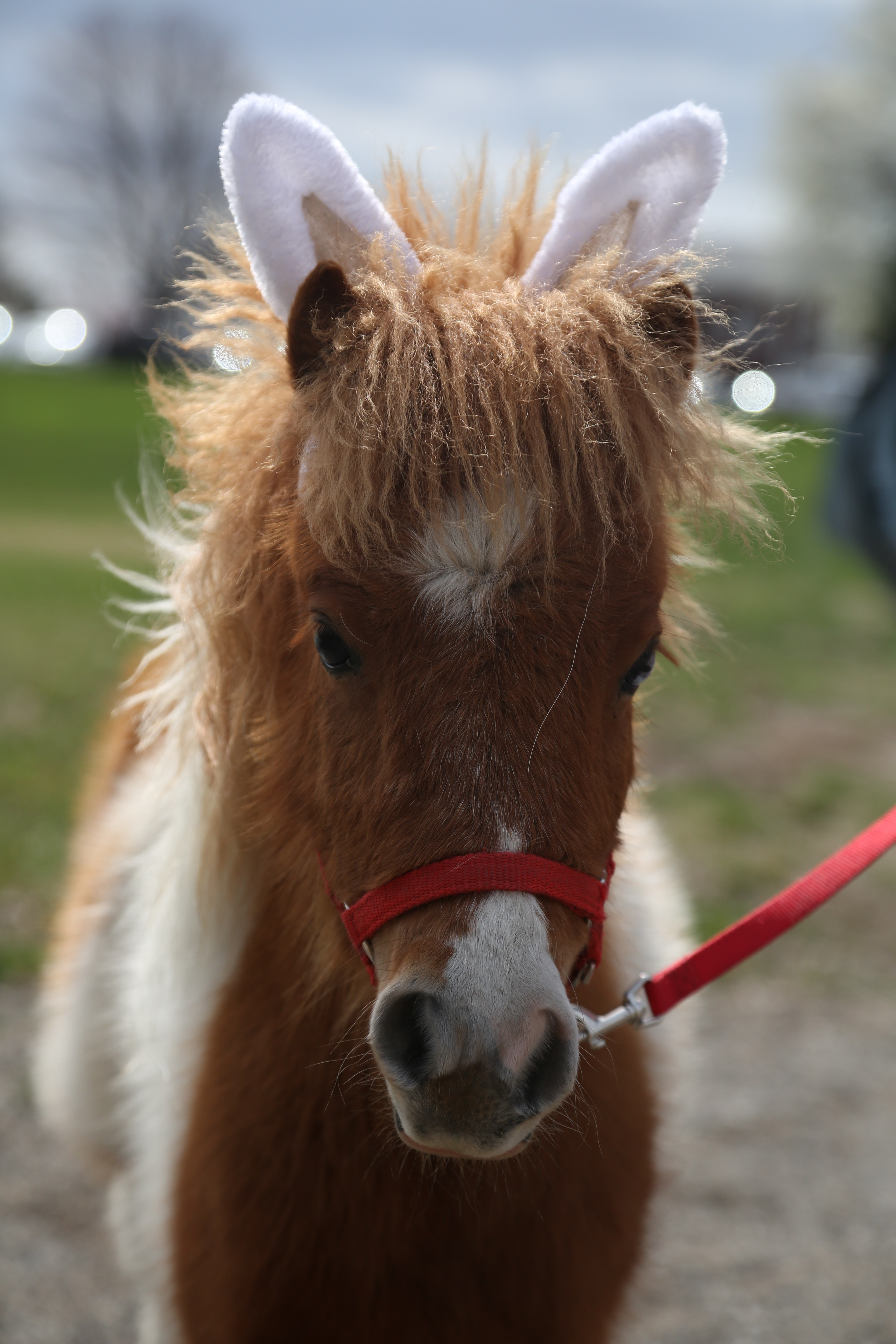 Mini Horses for kids
