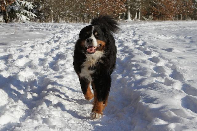 Sam kommt im Schnee