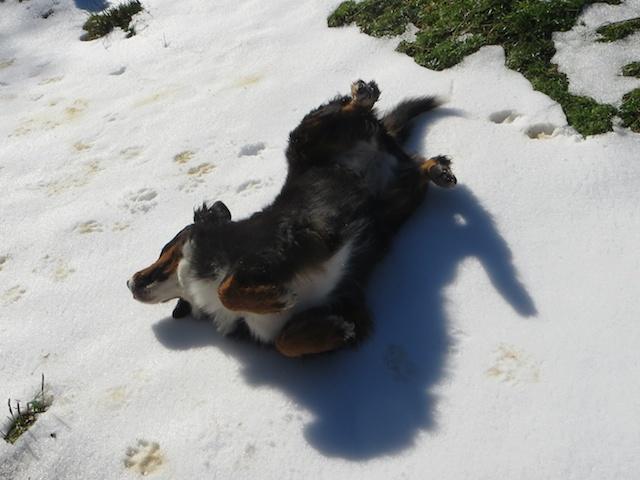 Koko im Schnee