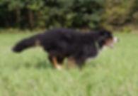 Oma Koko im Galopp 2 (1 von 1).jpg