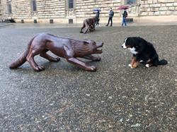 Rosi und der Wolf in Florenz