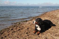 Koko am Strand