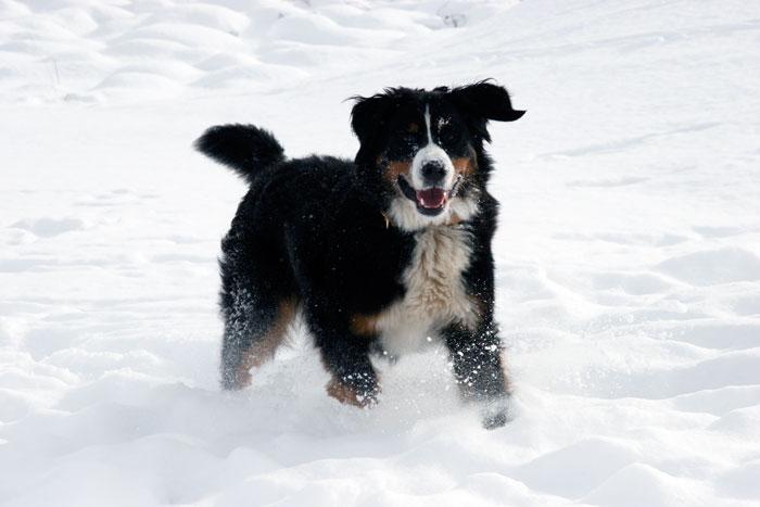 Koko Winter 2010