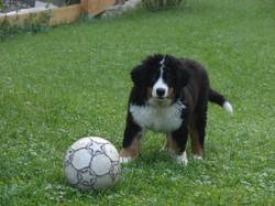 Fußballtraining mit Ecci