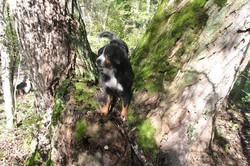 Koko auf dem Baum (Oktober 2014)