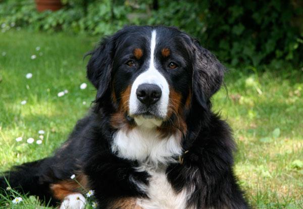 Koko 2 Jahre alt