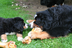 Egeria und Kamillo