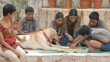 Animal Assisted Therapy in India