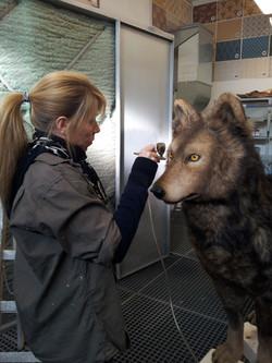 Anfertigung Wolf
