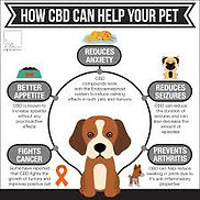 How CBD helps your Pets.jpeg