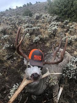 Bull w Hat.jpg