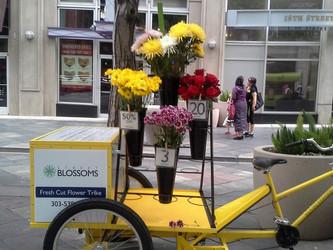 Street Blossoms