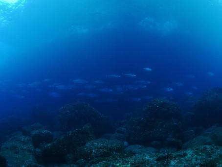 待ちわびたケータ列島